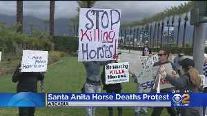 Animal Rights Activists Protest At Santa Anita Park Following 20th Horse Death [Video]