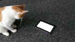 Cat deeply intrigued by tablet video game [Video]