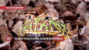 The Oldest Frog Has Been Found In Arizona [Video]