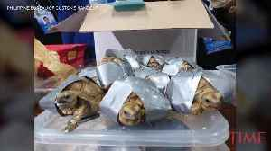 Authorities Found 1,500 Turtles Inside Abandoned Luggage at an Airport in the Philippines [Video]