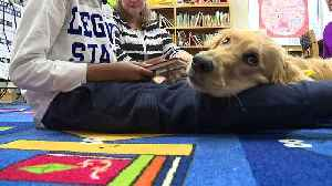 Rosie the Reading Dog Helps North Carolina Students Practice Reading Out Loud [Video]