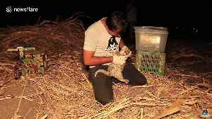 Lost leopard cub reunited with mother in India [Video]