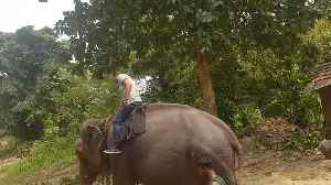 Riding An Old Elephant First Time In Sri Lanka [Video]