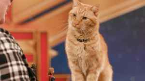 'Captain Marvel's' Reggie the cat on playing Goose and his 'Avengers: Endgame' theories [Video]