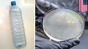 Genetically tweaked microbe can make plastic from plants [Video]
