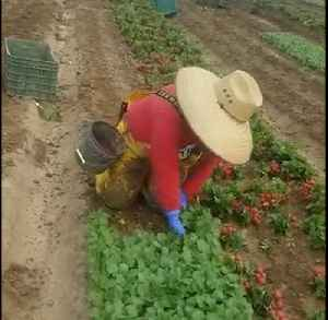 United Farm Workers Share Footage of the Labor That Goes Into Cultivating Produce [Video]