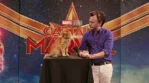 An Interview with Captain Marvel's Goose! The Breakout Cat on What He Wore to the Premiere [Video]