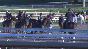 California Racetrack Where 21 Horses Have Died in Recent Weeks Reopens Training Track [Video]
