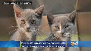 Florida Congressman Co-Sponsors Bill To End 'Taxpayer Funded Kitten Slaughter' [Video]