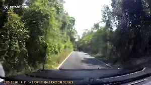 Give way to oncoming elephants! Driver gets jumbo shock as he rounds bend [Video]