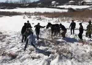 Police and Passers-By Rescue Horse From Icy Pond [Video]