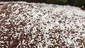 Severe gales pummel parts of UK as super-sized hail hits Oldham [Video]