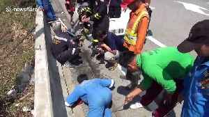 Dozens of chicks are rescued after falling into motorway storm drain [Video]