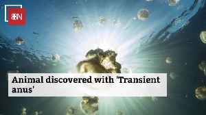 The Interesting Ocean Facts About Transient Anus [Video]