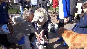 News video: 'Brexit is a dog's dinner' Pro-EU pooches gather near Houses of Parliament in London