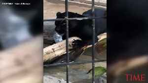 Jaguar Attacks Woman Who Tried to Take a Photo at an Arizona Zoo [Video]