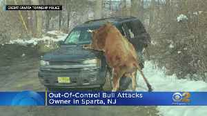News video: Bull Attacks Owner In New Jersey