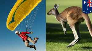 Paraglider nails landing only to get nailed by attacking kangaroo [Video]