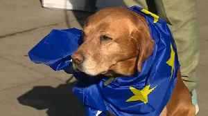 Protesters stage dog's dinner demonstration over Brexit outside Parliament [Video]