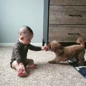 Dog Playfully Jumps Around Baby [Video]