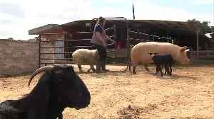Freedom farm: disabled animals get refuge in Israel [Video]