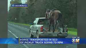 Horse Spotted Going 70 MPH Down Texas Freeway In Pick-Up Truck [Video]