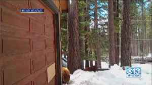 VIDEO: Bears Family Hangs Out In Front Of Tahoe Garage [Video]