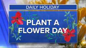 Daily Holiday - Plant a flower day [Video]