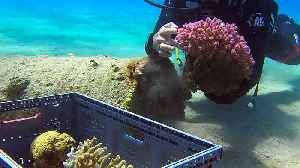 Red Sea corals flourish at previously-restricted Israeli beach [Video]