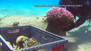 Israel moves coral from the beach while site is cleaned [Video]