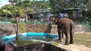 Hilarious elephant giggles while spraying zoo guests [Video]