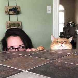 Cat and Owner Peek Over Kitchen Counter [Video]