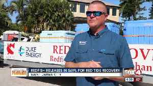 Thousand of redfish released off Pine Island [Video]
