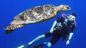 Scuba diver has thrilling encounter with endangered sea turtle [Video]