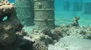 Israel moves corals after secret beach reopens [Video]