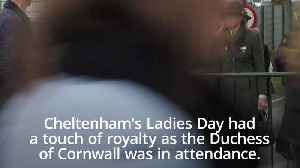 Camilla and Andy Murray attend Ladies Day at the Cheltenham Festival [Video]