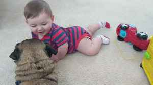 Babies LOVE Dogs! [Video]