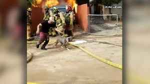 Man Risks His Life to Save Dog From Burning Home [Video]