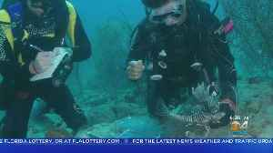 Marine Conservation Group Teams Up With Frost Museum To Remove Invasive Species [Video]