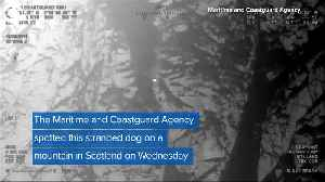WEB EXTRA Dog Rescued Off Mountain [Video]