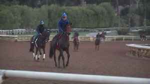 News video: Another Horse Dies at California Racetrack, the 22nd in Recent Months