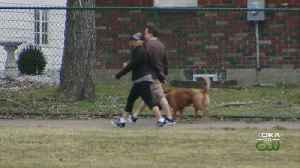 Dog Walkers Harassed By Couple At Local Park [Video]