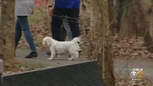 Police Warn Of Couple Harassing Dog Walkers At Local Park [Video]