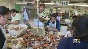 Gov. Hogan Calls For More Visas For Seasonal Crab Pickers, Says Industry Won't Survive Under Current Regulations [Video]