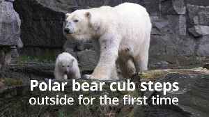 Polar bear cub steps outside for the first time [Video]
