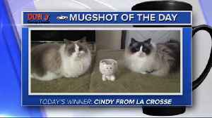 Mug shot of the day - Cindy from La Crosse [Video]
