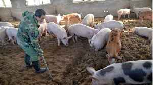 U.S. Seizes 1 Million Pounds Of Pork From China Citing Swine Fever Concerns [Video]