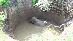 Helpless Baby Elephant Rescued From Well Returns To The Wild [Video]