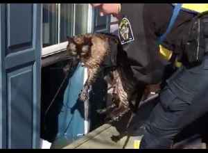 Police Pull Cat Through Window of Flooded Bellevue Home [Video]