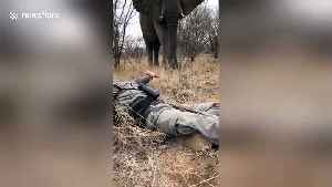 Man has incredible encounter with wild bull elephant on foot [Video]